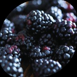 nutrition, digestion & food intolerances